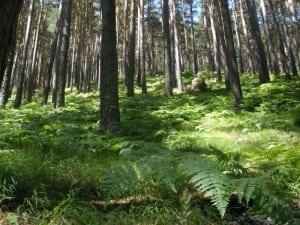El Chorro Natural Environment - 800x600
