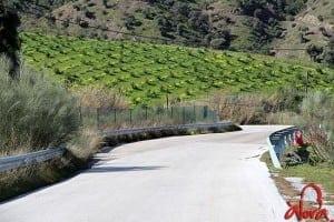 obras-carretera-alora-el-chorro